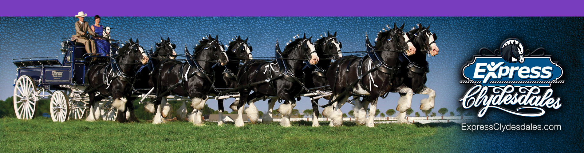 Clydesdales Generic Home Page Banner Image